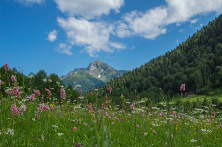 Beautiful view of alpine meadows in the Caucasus mountains. 스톡 콘텐츠 - 129346222