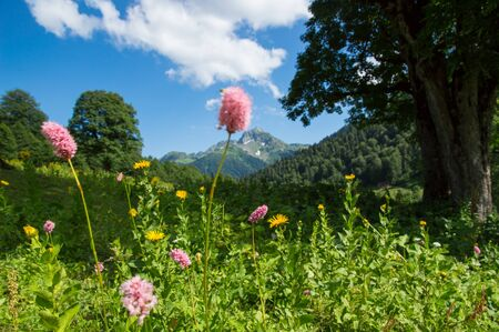 Beautiful view of alpine meadows in the Caucasus mountains. 스톡 콘텐츠