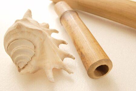 stillife: sea shell. Stillife