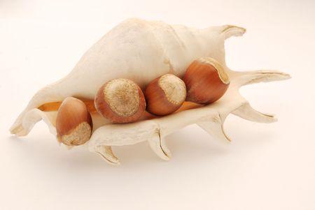 stillife: sea shell and nuts. Stillife