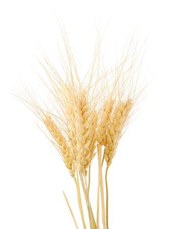 cebada: la naturaleza de trigo de oro sobre fondo blanco. Closeup