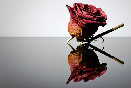 withered red rose. Beauty death flower photo