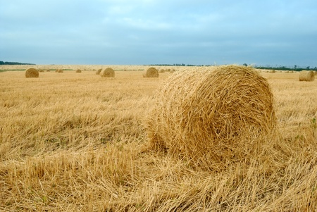 rick: field after harvesting crops. autumn Stock Photo