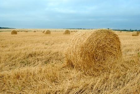 field after harvesting crops. autumn Banco de Imagens