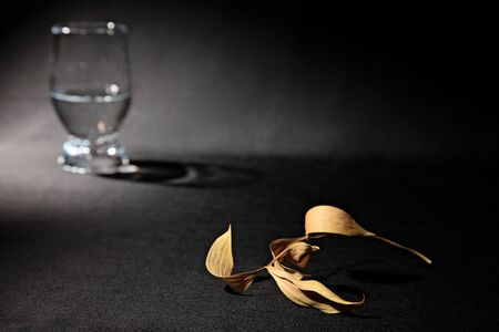stillife: abstract stillife with dry leaf and glass with water