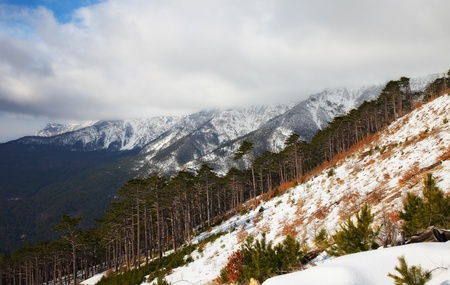 everywhere: mountain landscape with evergreen tree. nature