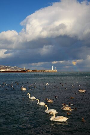 lighthouse abd flock of birds on water photo