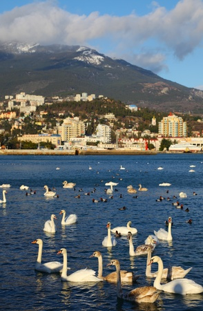 flock of birds on water. nature Stock Photo - 12823331
