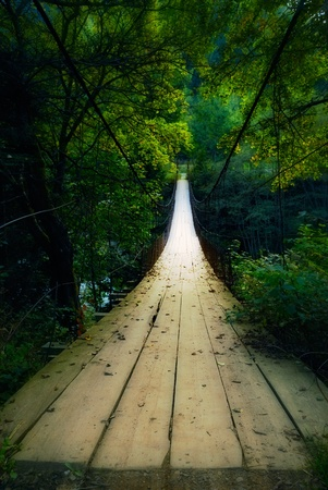 bridge in the forest: suspended wooden bridge illuminated by light