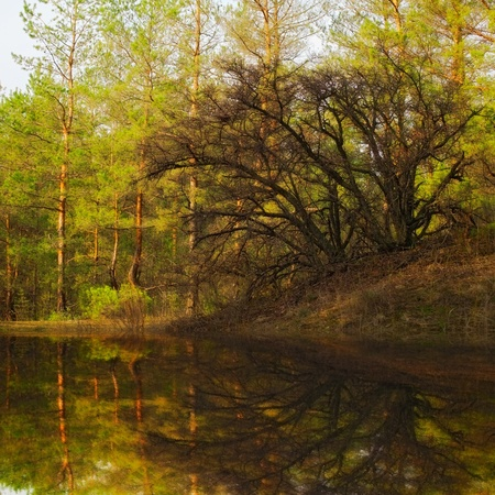 old tree reflection in still water photo