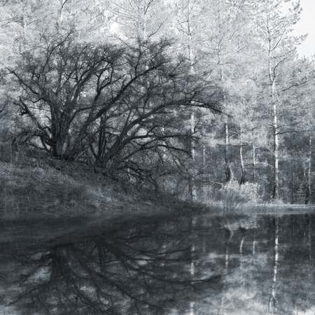 everywhere: old tree in forest reflection in lake