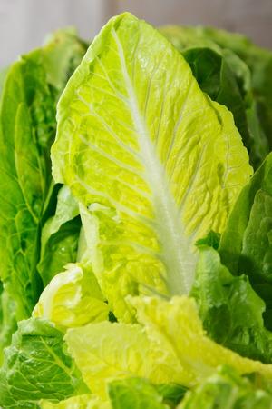 fresh greens  lettuce. healthy food photo