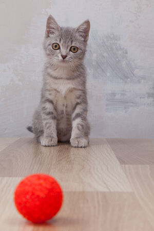 little kitten with small red ball photo