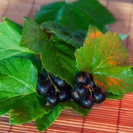 black currant, ripe berries and green leaves on table photo
