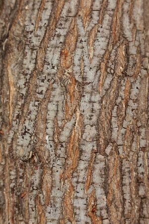 tree bark: cracked tree bark pattern closeup Stock Photo
