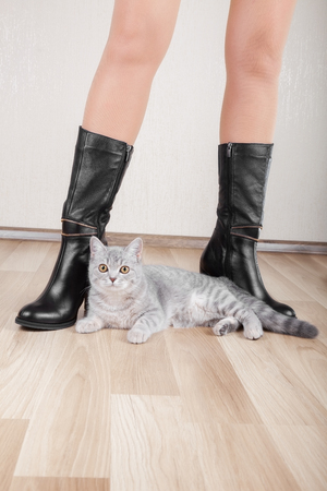 patent leather: Beautiful patent leather shoes with thin legs and a cat
