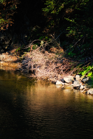 riverbed: landscape with riverbed in morning light. nature Stock Photo