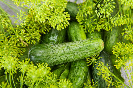 inflorescence: cucumber with inflorescence dill. food Stock Photo