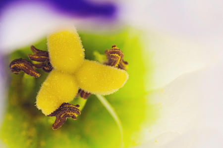 beautiful lisianthus. close-up photo