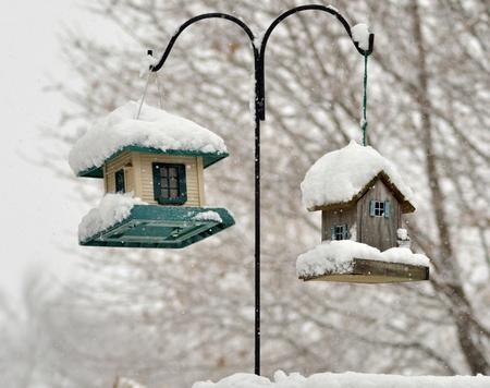 Vogel-Feeder im Winter park