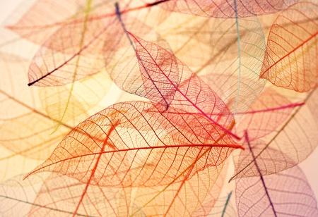 뼈대 배경 나뭇잎 스톡 콘텐츠