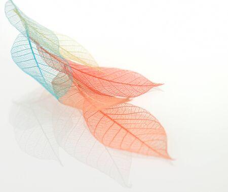 Skeleton leaves background photo