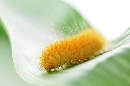 macro yellow caterpillar Banco de Imagens - 8981911
