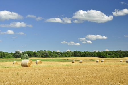 hay bales: country summer landscape Stock Photo