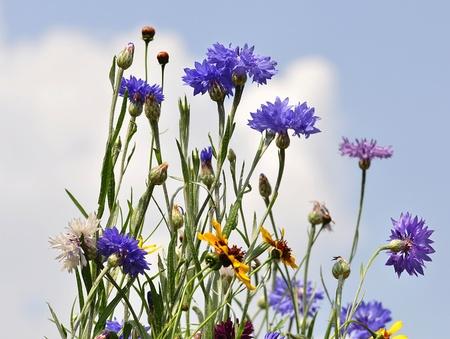summer wild flowers agains a blue sky photo