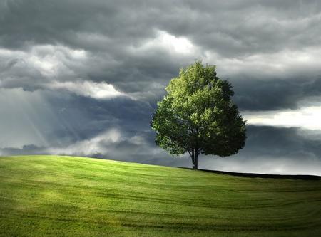 언덕에 단 하나 나무 스톡 콘텐츠