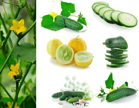 assortment of fresh organic cucumbers from garden   photo