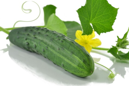 Cucumber on white with flower