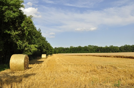 Hay bails in a field  photo