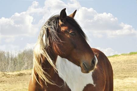 paard Stockfoto
