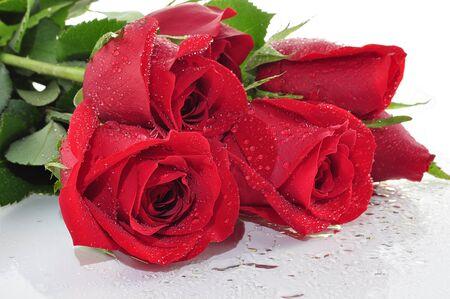 rose stem: red roses