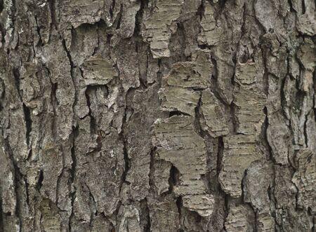 bark background Stock Photo - 9099044