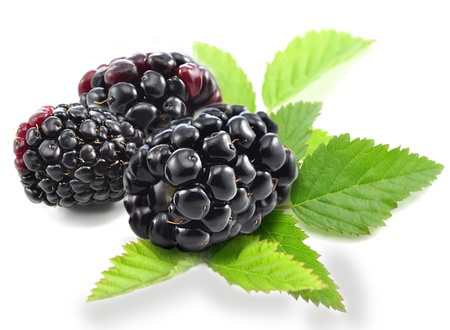 berry: fresh blackberries with leaves on white background Stock Photo