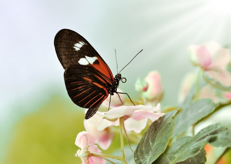 a beautiful tropical butterfly ,   photo