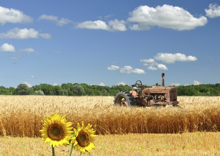 old broken tractor on a wheat field  photo