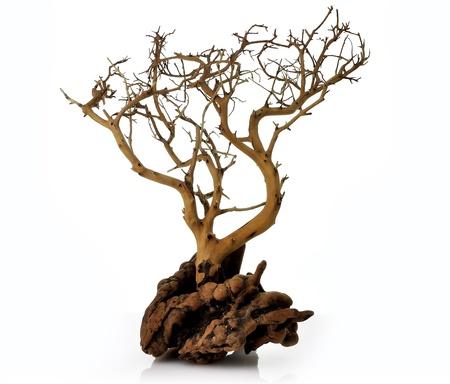 un árbol seco sobre fondo blanco