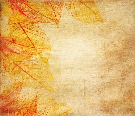 スケルトンの葉グランジ背景 写真素材 - 10472286