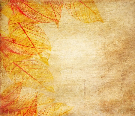 autumn colour: Skeleton leaves grunge  background