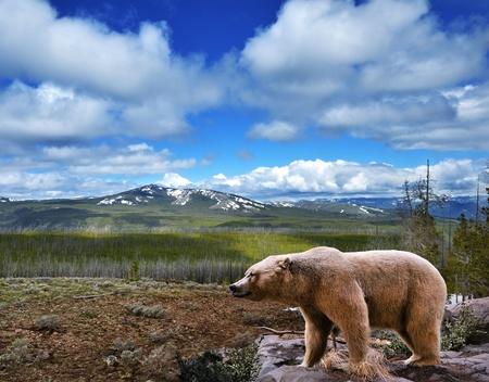 grizzly: Piękny krajobraz górski z niedźwiedziem