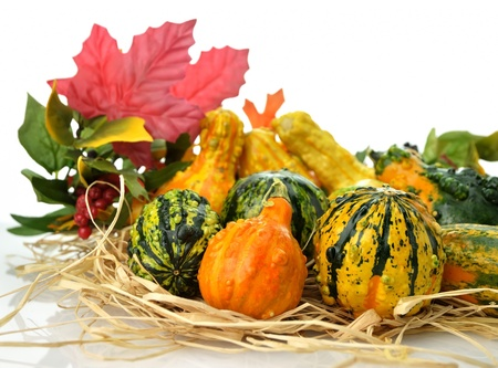 gourds: Small Colorful Gourds Collection With Autumn Leaves
