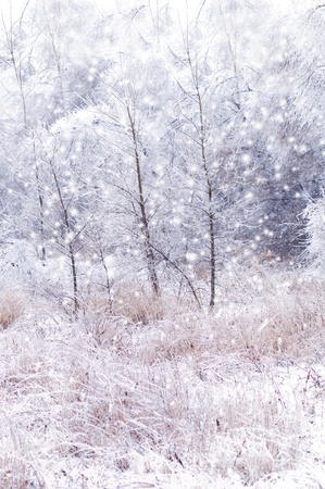 winter background with trees and snow photo