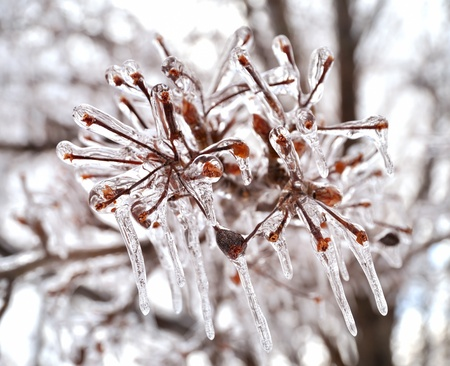 snow crystal: Close up of ice on a tree in winter