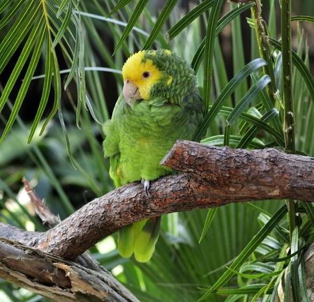 Kleurrijke Groene En Gele Papegaai zittend op een tak