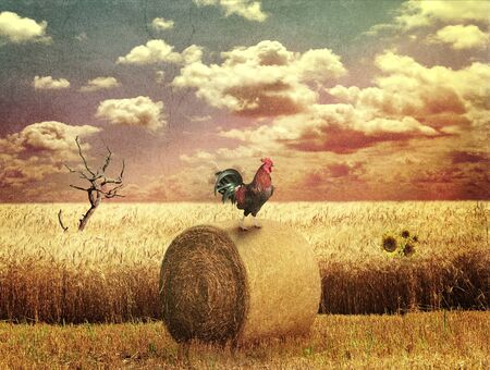 outumn: Grunge Country Landscape With Wheat Field Stock Photo