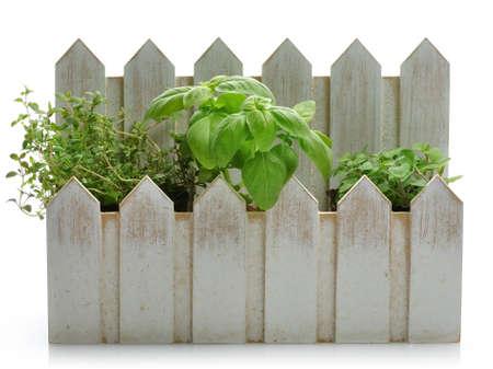 Fresh Herbs In A Decorative Flowerpot On White Background photo