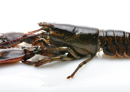 Raw Lobster , Close Up On White Background